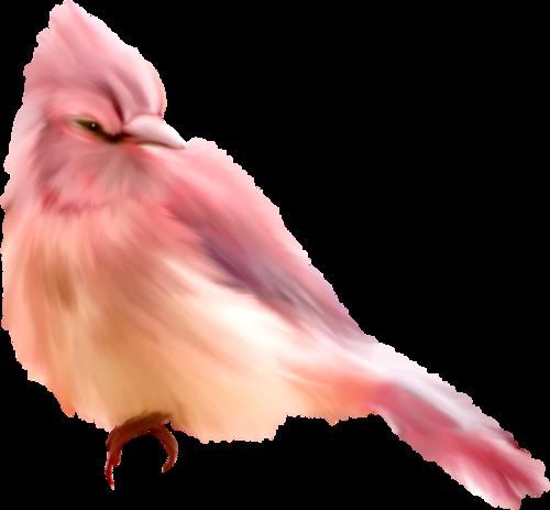 «Greedy-Pink» 0_8fd09_ceff6b9_L