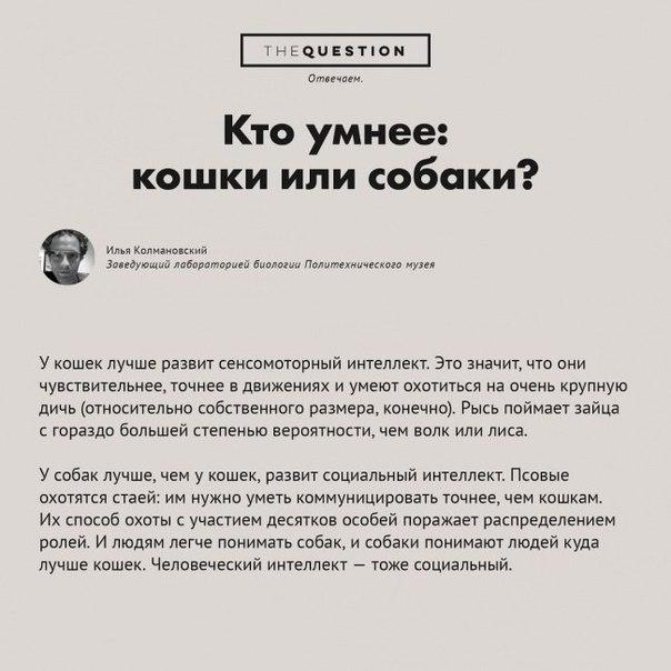 Вопросы и ответы в картинках