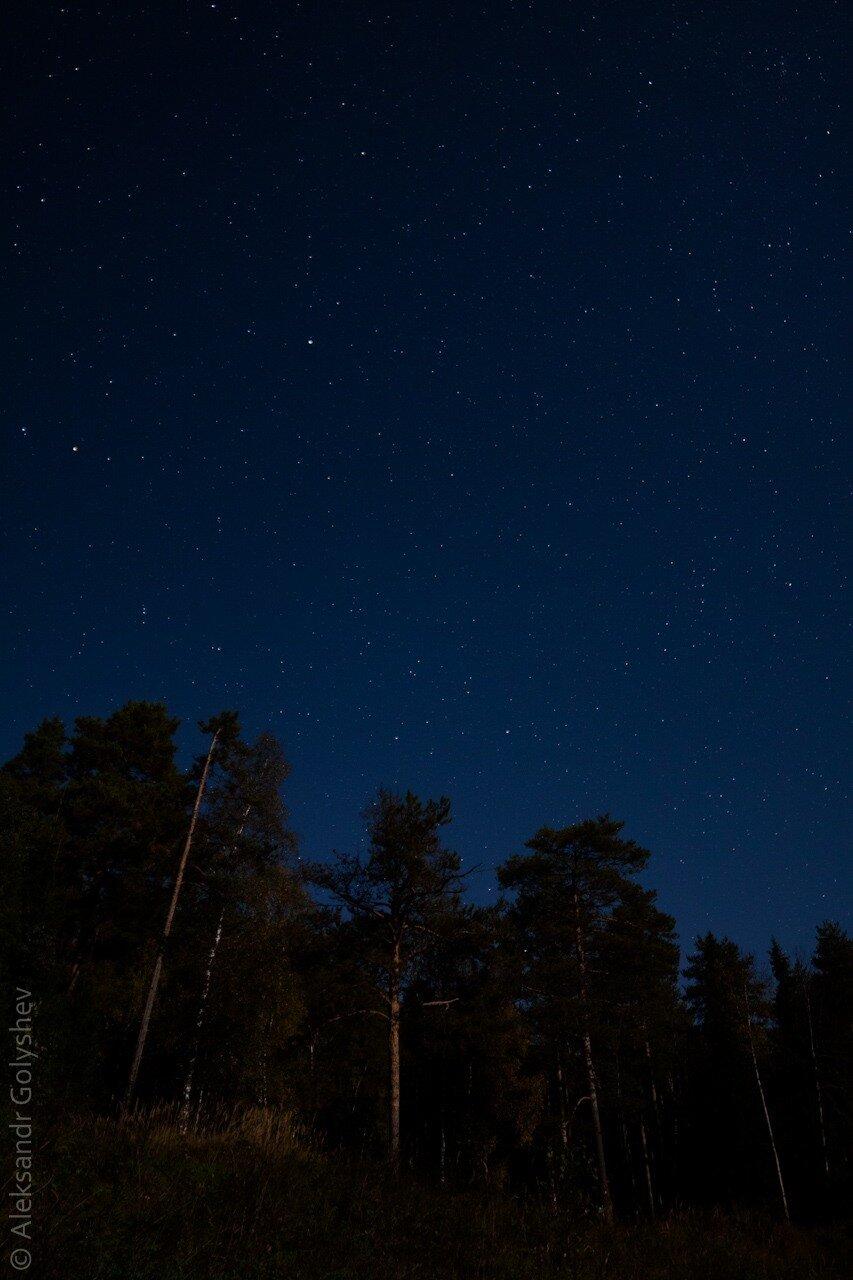 Сосновый бор ночью