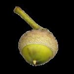 acorns36.png