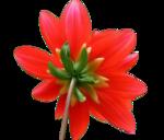 цветы (96).png