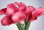 цветы (177).png