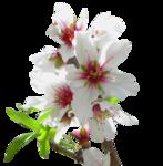 цветы (178).png