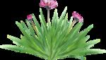 Forest_Scent_Zalinka_el (45).png