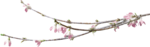 ial_llv_blooming_branch2.png
