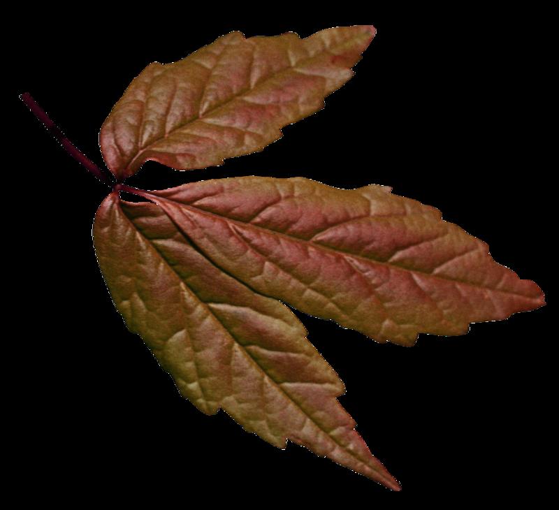 Салатовые листья с коричневым оттенком.