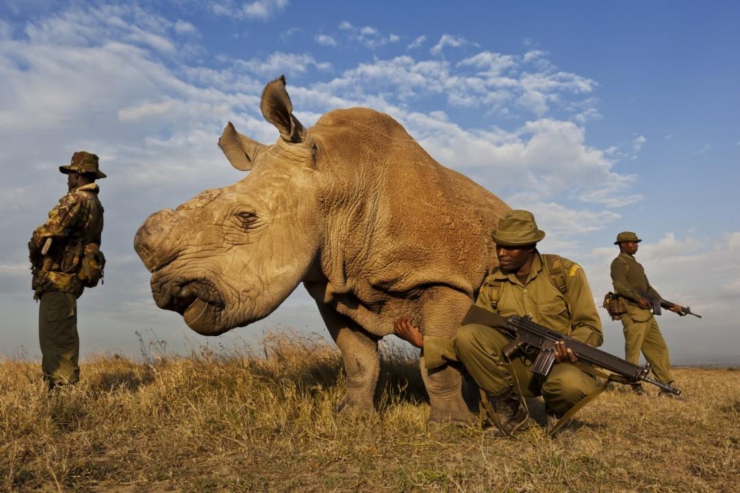 В дании носороги не водятся загадка