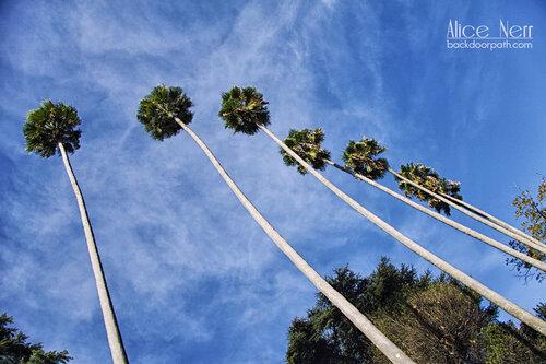 palm trees in Porto, portugal