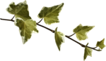 Lilas_btd_foliage7.png