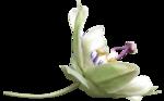 «Lavender Time» 0_90c06_311e0be6_S