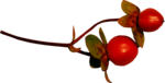 Renadesigns_forestfruits_el3.png