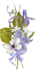 IndigoD_Serenity_cluster (2).png