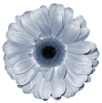 «Denim And Daisies» 0_94283_18eb8a12_S