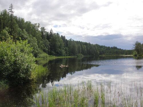 Лесное озеро. Безуспешная рыбалка.