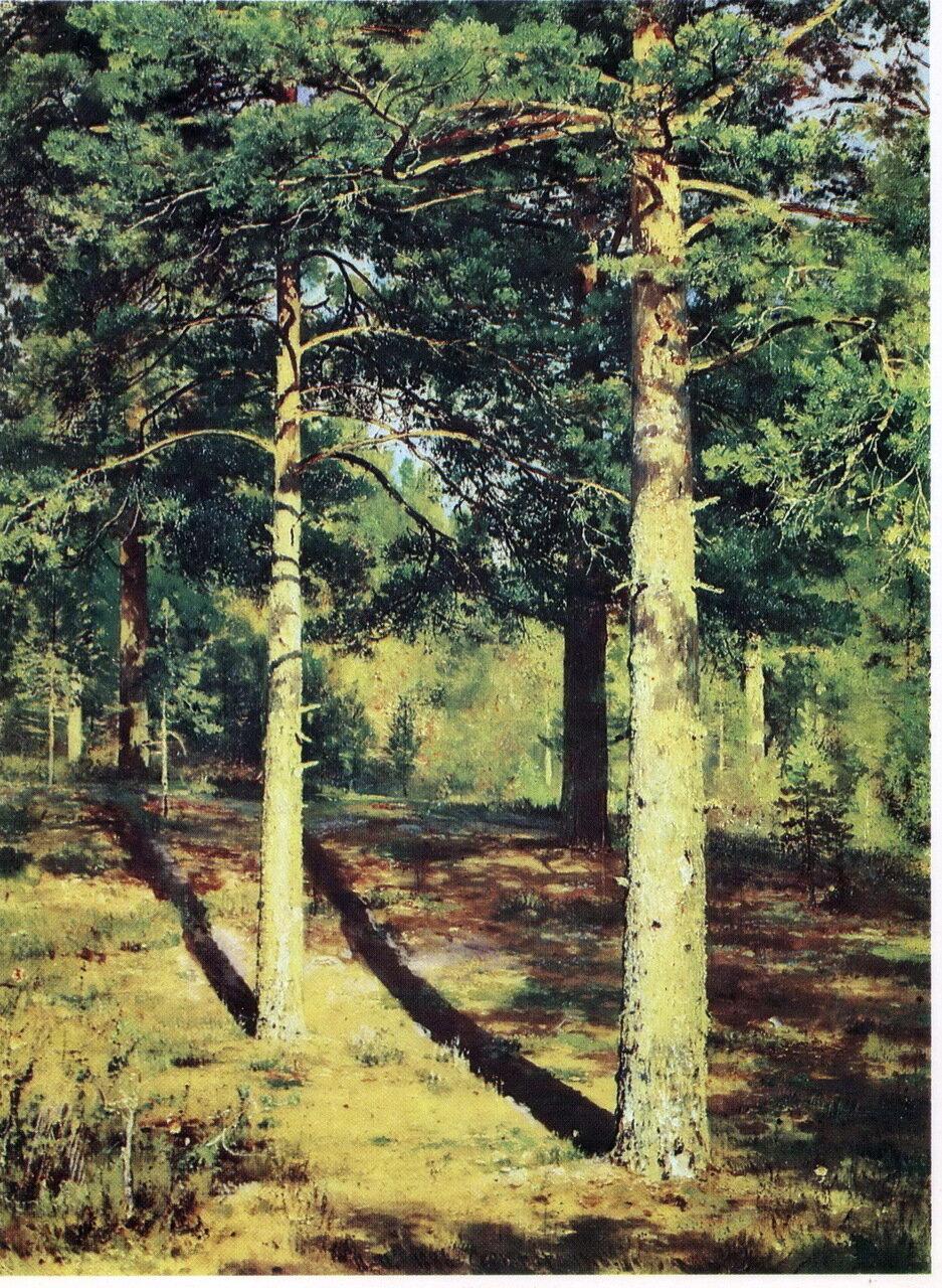 Шишкин Сосны, освещенные солнцем. Этюд. 1886