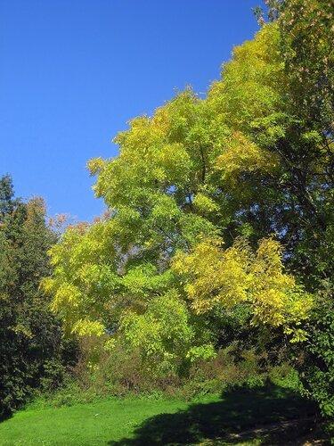 Осень начинает украшать деревья