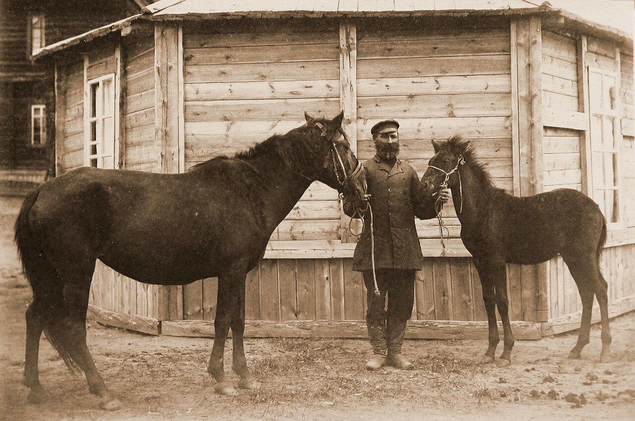 24. Кобылица с жеребенком из табунов И. И. Бакшеева