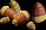 acorns45.png