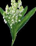 цветы (86).png