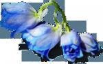 цветы (159).png