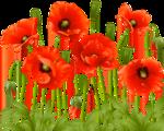 цветы (163).png