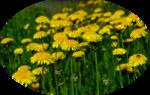 цветы (164).png