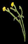 Palvinka_FlowerAdventure_flowers3.png