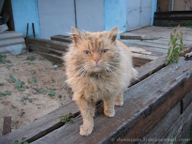 Кот с улицы Чехова :)
