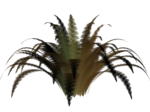 R11 - Nature Time 1 - Fern - 006.png