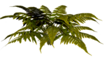 R11 - Nature Time 1 - Fern - 012.png