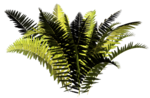 R11 - Nature Time 1 - Fern - 017.png