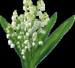 «kimla_Spring_Cooking»  0_91075_ee53b289_S