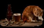 869_-_cat_-_LB_TUBES.png