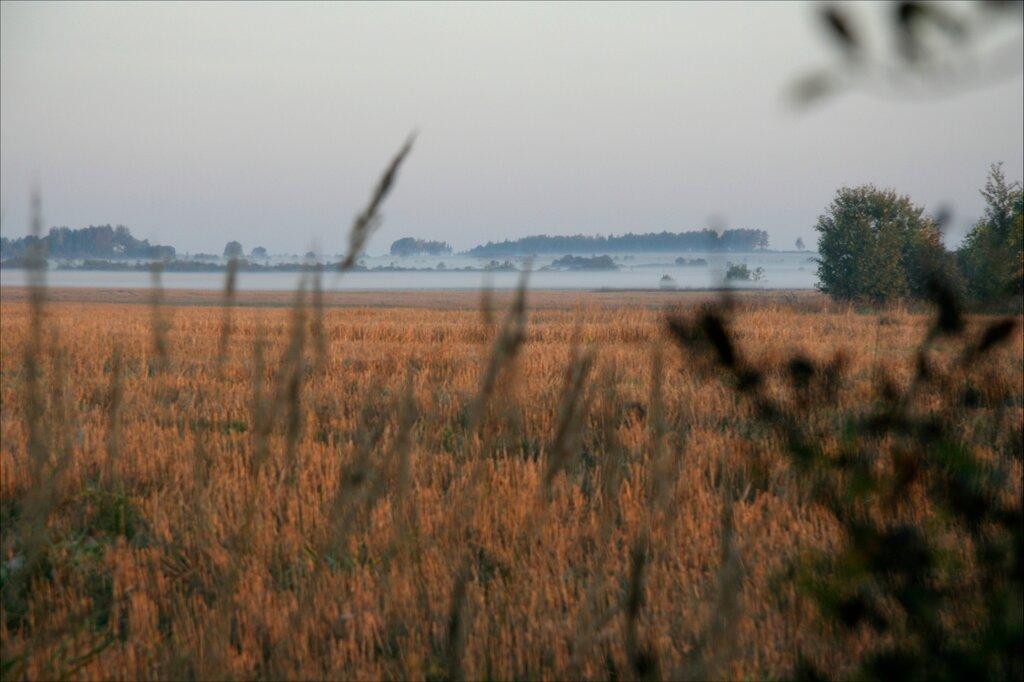 Журавлиная родина, утренний туман