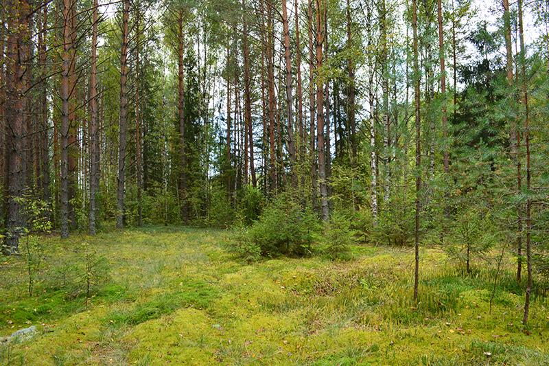 осень 15 лес5