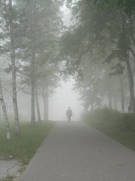 туман в городе проспект