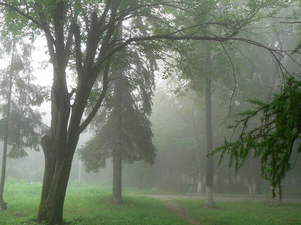 туман в городе сквер