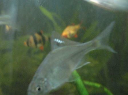 Aquarium Glaser, сентябрь 0_f7d6b_5f669620_L