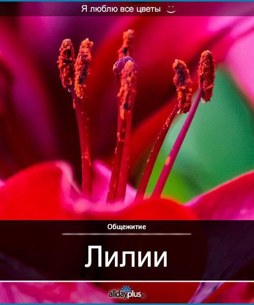 Я люблю все цветы, часть 22