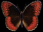 jbillingsley-autumnbreeze-butterfly1.png