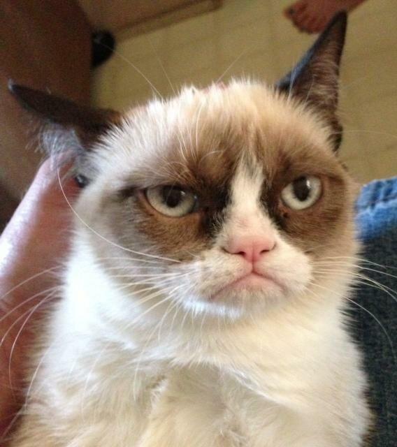 Самый недовольный кот интернета