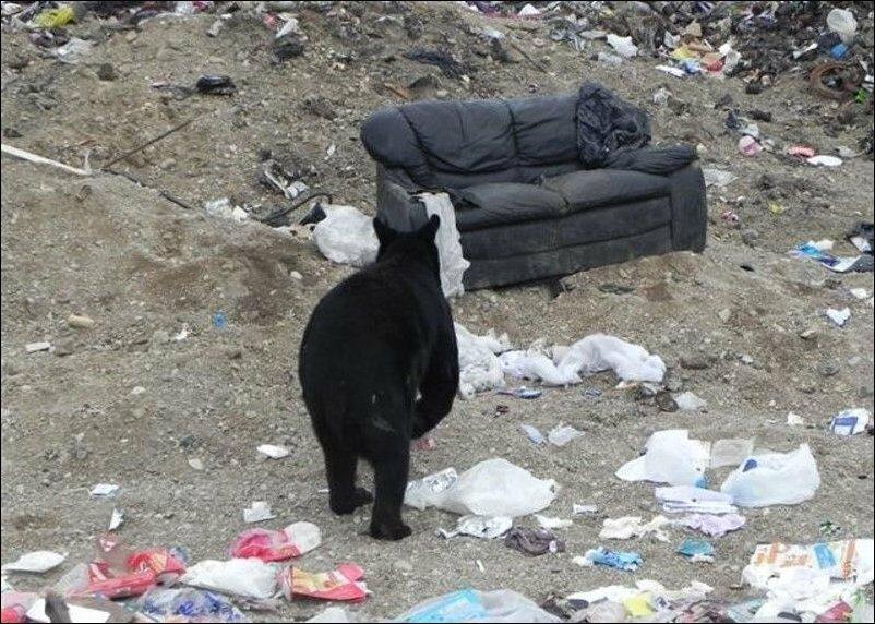 Шел медведь