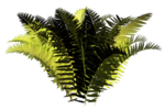 R11 - Nature Time 1 - Fern - 016.png
