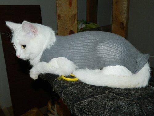 Попона для кота