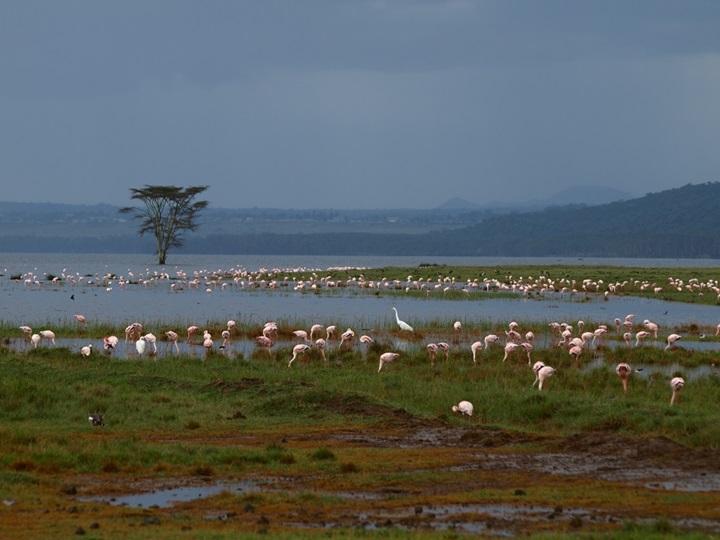 Сафари в Африке: самые необычные фотографии животных Кении, Танзании и Занзибара