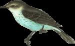 priss_strangebeauty_birdblue.png