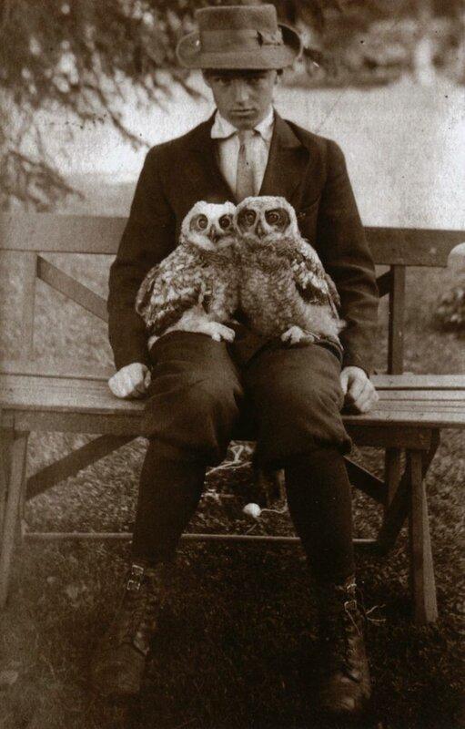 Boy with pet owls, circa 1911