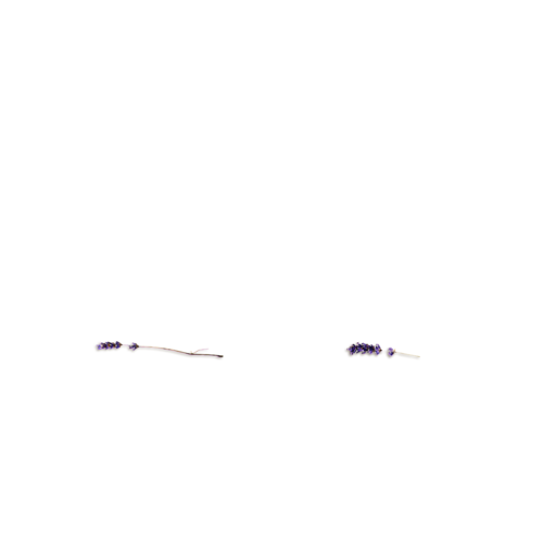 «Kimla_LavenderStory» 0_9024a_e71e9bbe_L