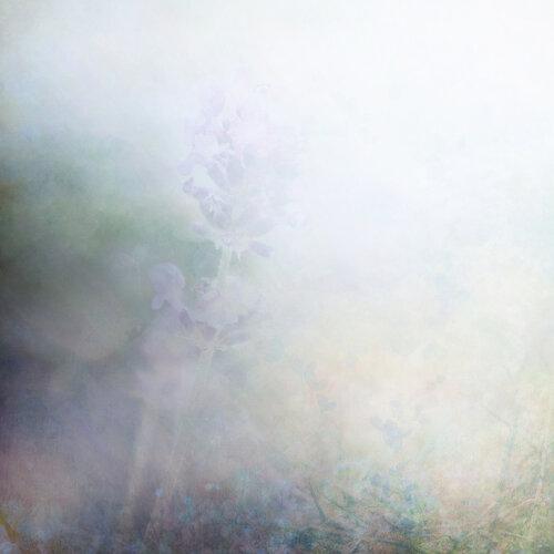 «Kimla_LavenderStory» 0_9027a_cc47ffdb_L