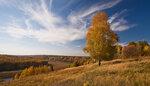 aleshirokikh. река. дерево. осень. природа. берег. берёза.  25 сентября 2012 года,14:58.